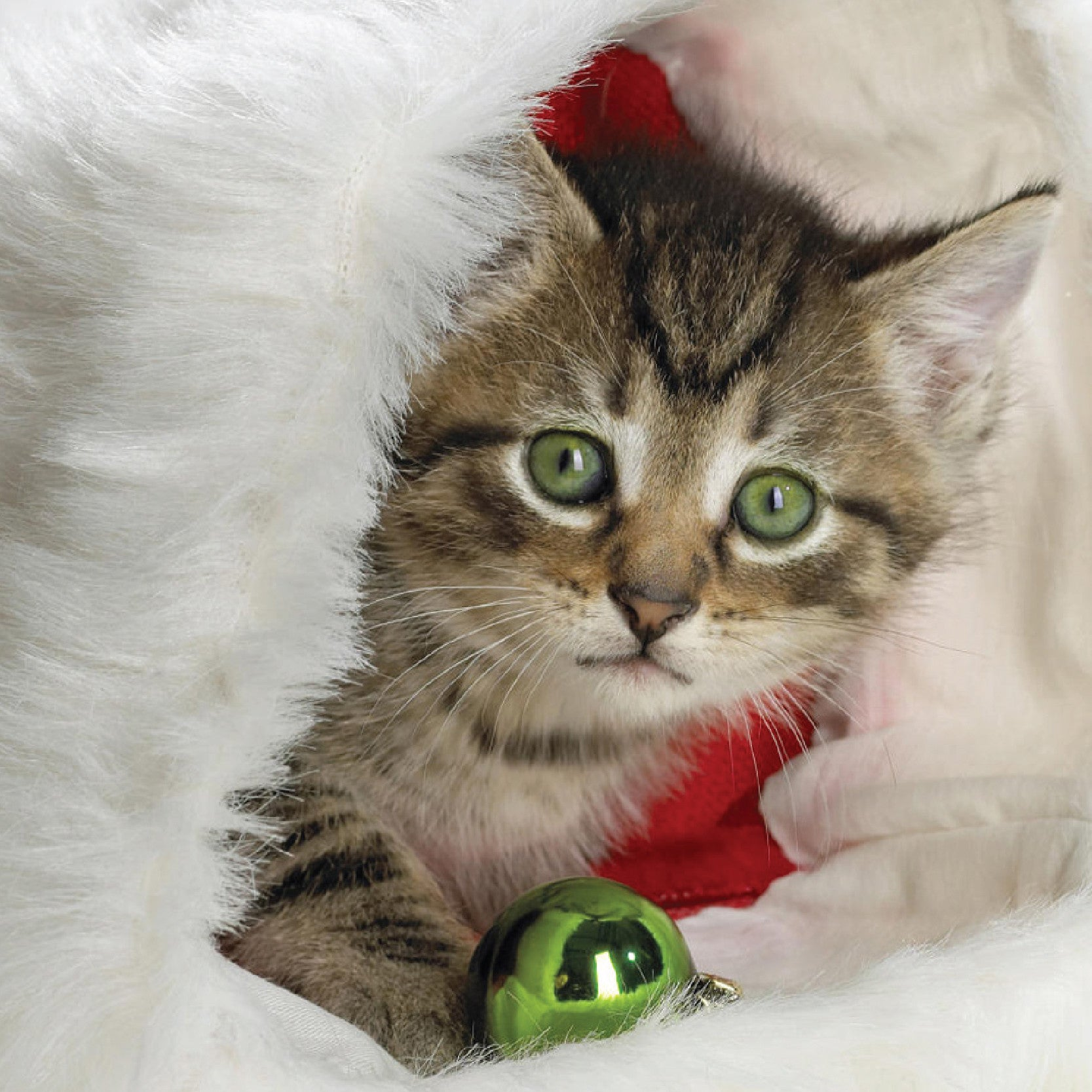 Pet Safety tips for the Holidays by Norma Mendez
