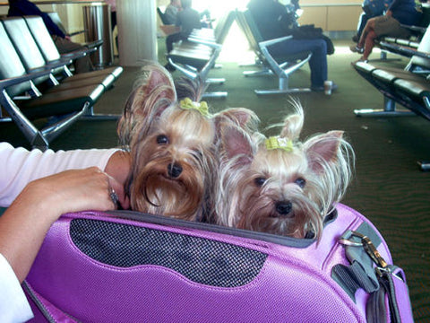 Violet & Olive looking forward to their plane trip