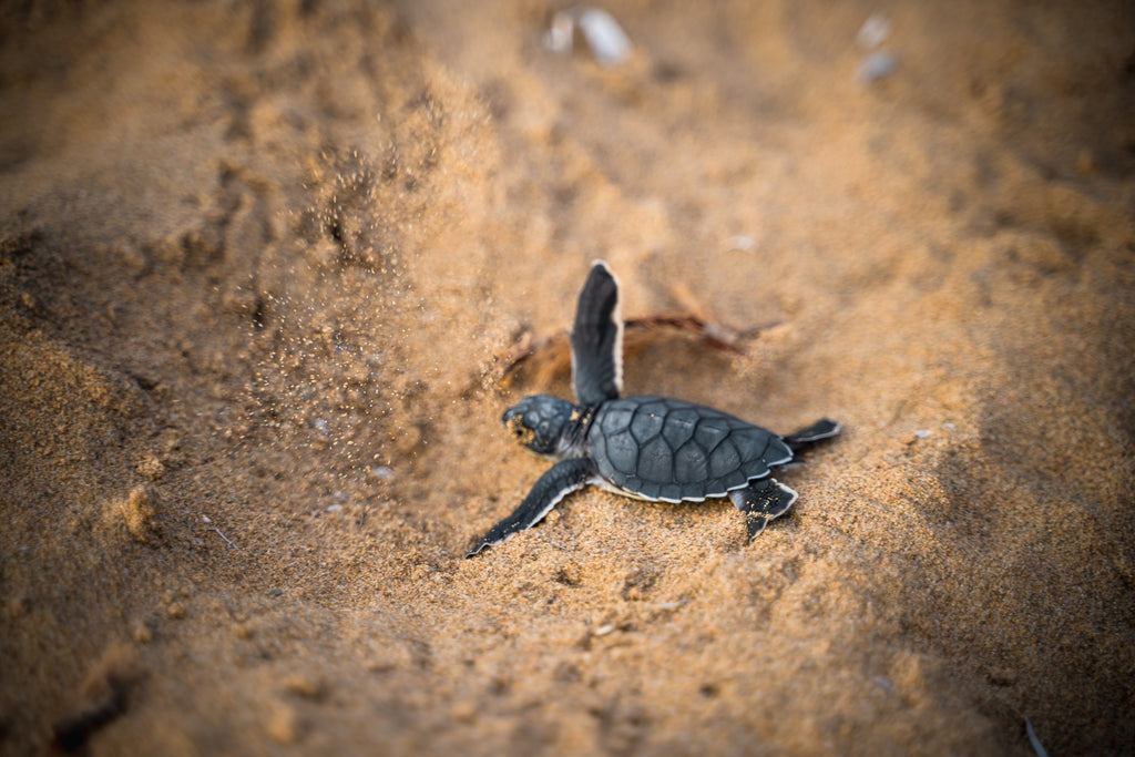 The Do's and Don'ts of Sea Turtle Protection