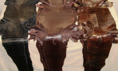Photo: Alligator Leather.net - under-belly of the alligator
