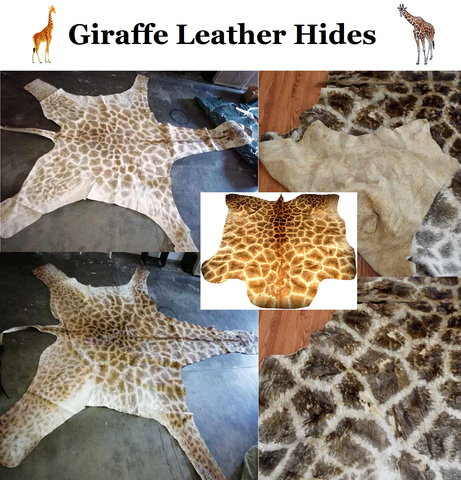 Photo: Safari Works Taxidermy Sales, Hides of Africa, ZebraHides.com - giraffe leather hides