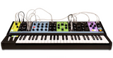 Matriarch 4-Note Paraphonic Analog Synthesizer