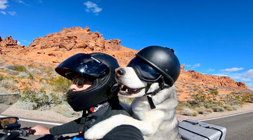 Sox Masters the Motorcycle: The Husky Who Has Gone Over 60,000 Miles on a Motorcycle