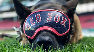 Drago -- German Shepherd, Red Sox Groundskeeper, Guardian Angel