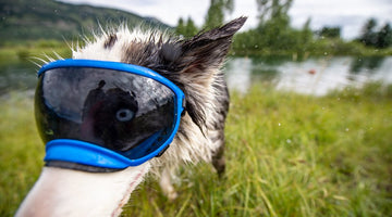 How Your Dogs Eyes Differ from Yours