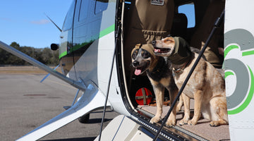 Expert Tips For Flying With Your Dog