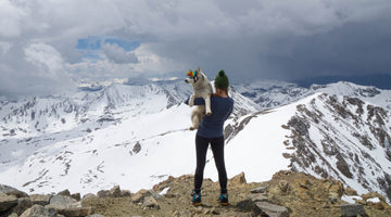 Service Dog, Loki, Summits Mount Rainier