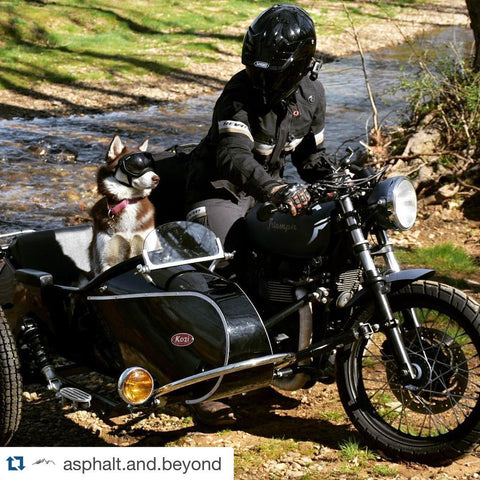 Beyond the Asphalt - sidecar dog
