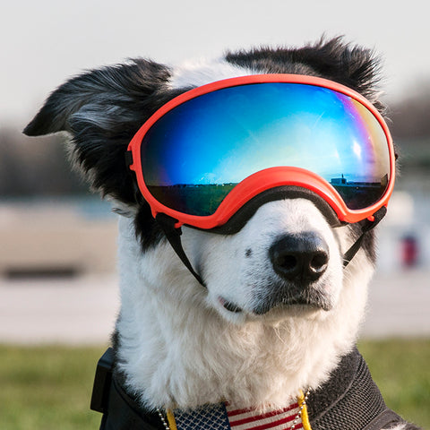 6 Best Dog Sunglasses And Goggles American Kennel Club