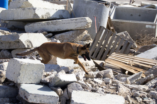 Search & Rescue K9 Luka searching through concrete rubble