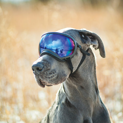 4c87103ca3 Rex Specs - Dog Goggles for the Active Dog
