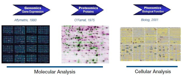 Phenotype MicroArrays for Microbial Cells