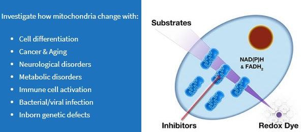 Mitochondrial Function Assays with MitoPlates