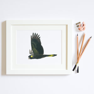 Black Cockatoo print