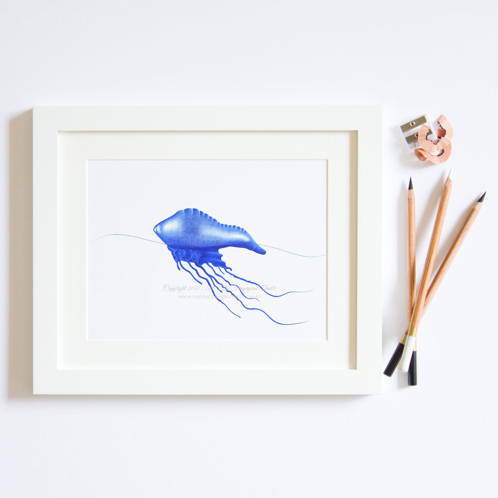 Bluebottle print