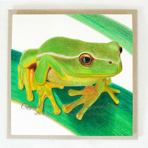 Frog 5 x gift cards