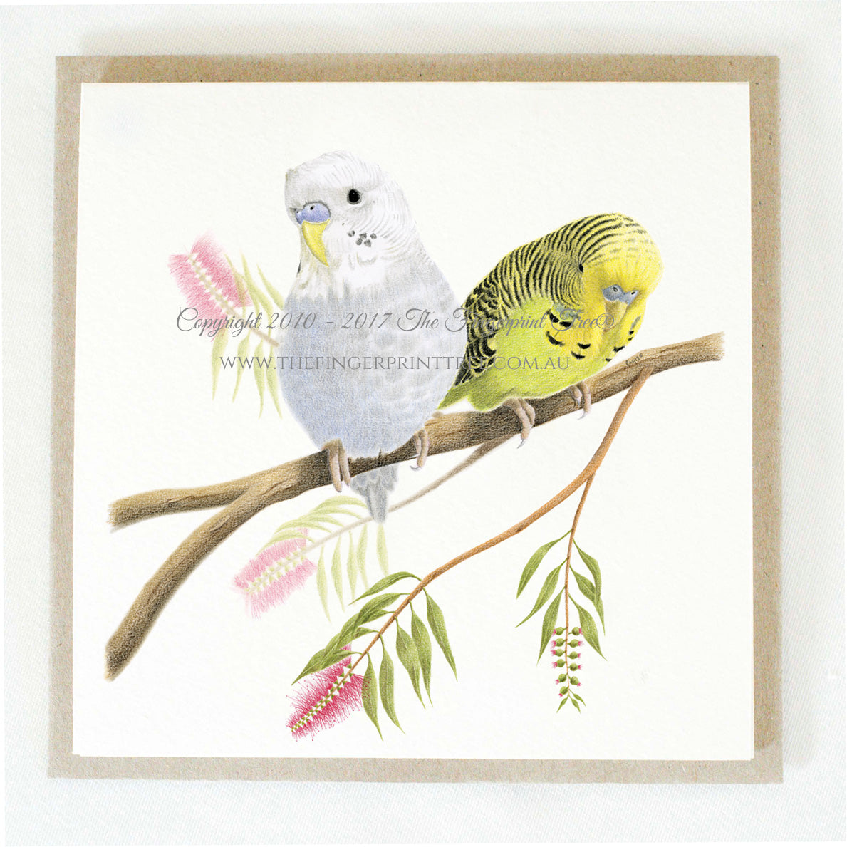 Budgies x 5 gift cards