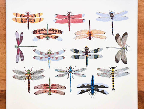Colorful Dragonflies Decals