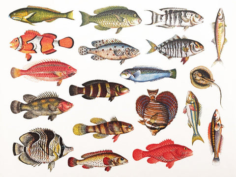 Colorful Fish Decals-The Glass Underground