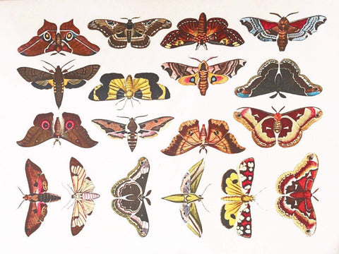 Colorful Moths Decals-The Glass Underground