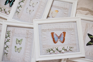 Butterfly Art Print Sets