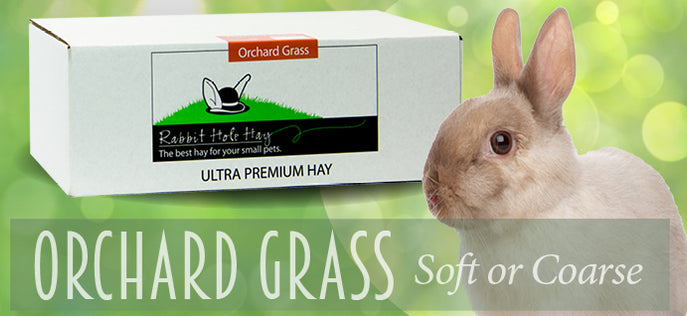 Rabbit Hole Hay Orchard Grass