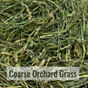 Coarse Orchard Grass Closeup