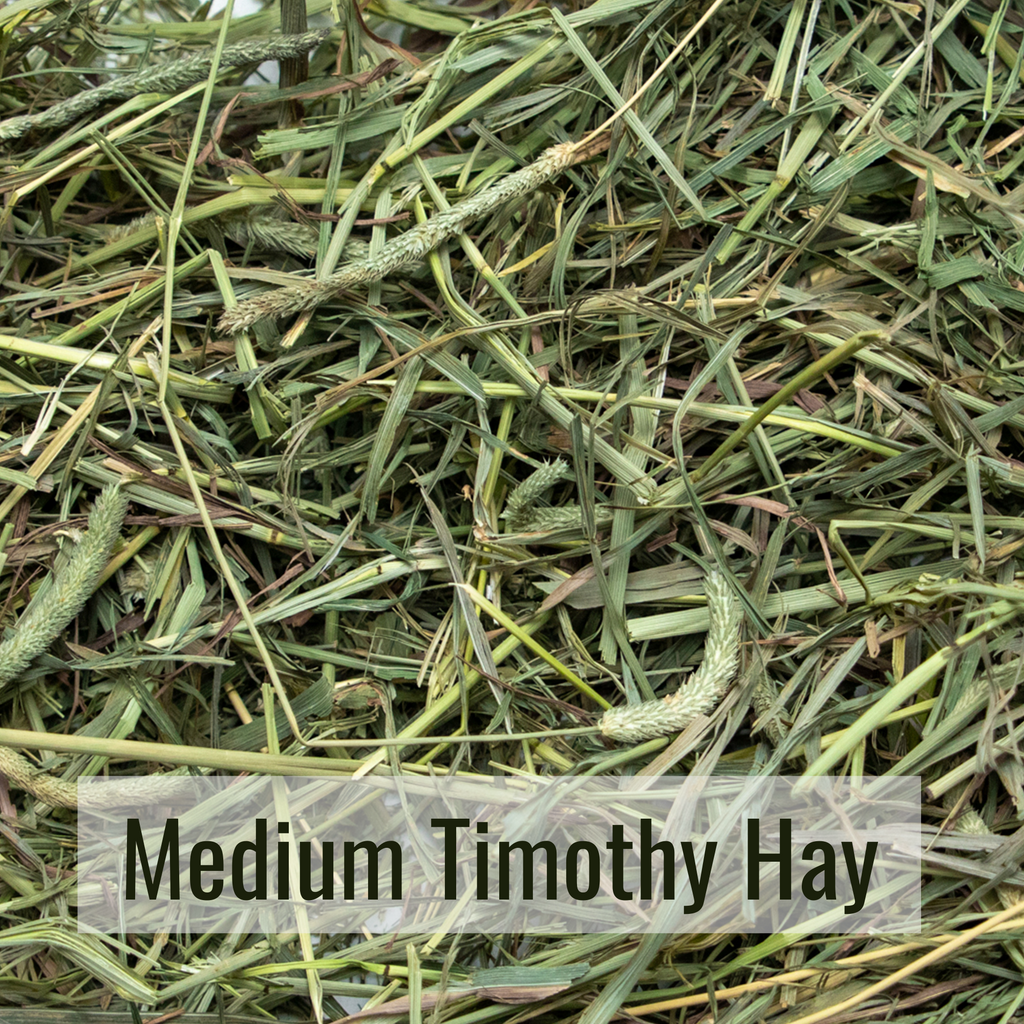 Medium Timothy Hay Closeup