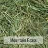 Mountain Grass Closeup