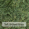 Soft Orchard Grass Closeup