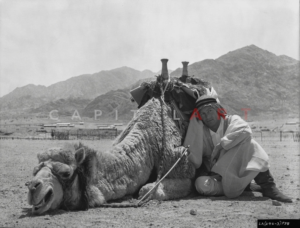 Peter O'Toole finds Shade behind a resting Camel in Lawrence of Arabia Master Print