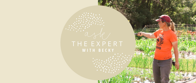 Ask the Expert with Head Gardener, Becky