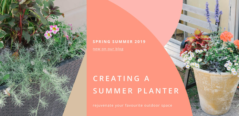 Creating a Summer Planter