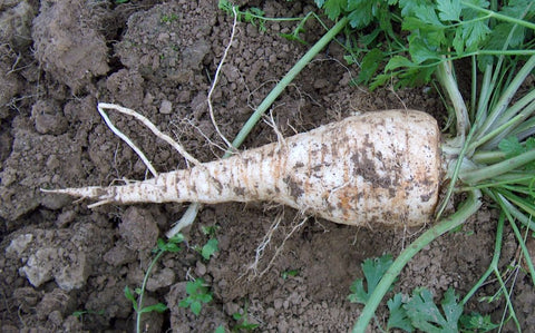 Parsley Root Cut And Sifted Bulk By The Ounce