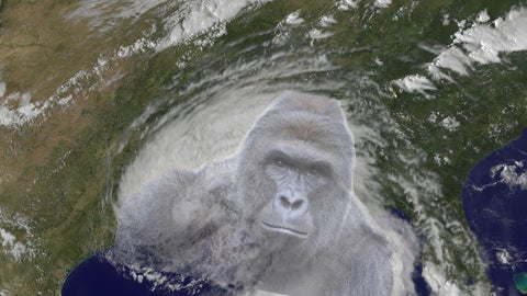 Hurricane Harambe Name change https://www.change.org