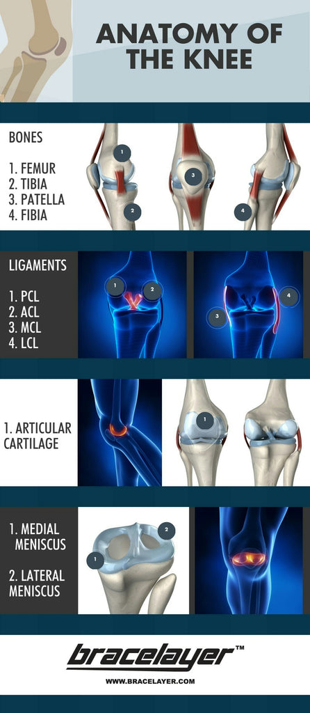 Knee Anatomy ACL PCL MCL Patella Tibia