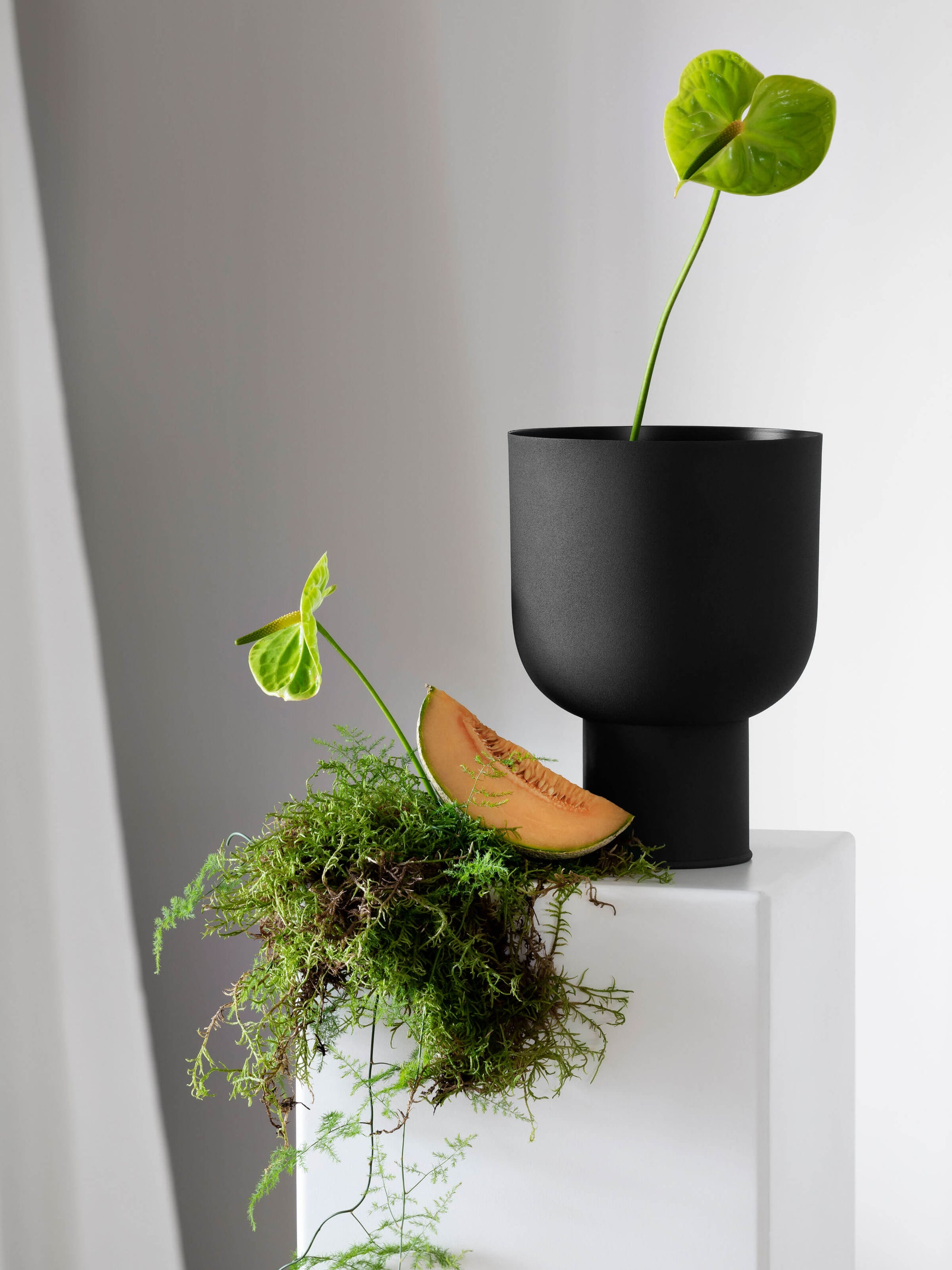 Mona Curve Planter - Black Planter 2020 Small