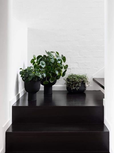 Mona Pot - Black Planter 2020