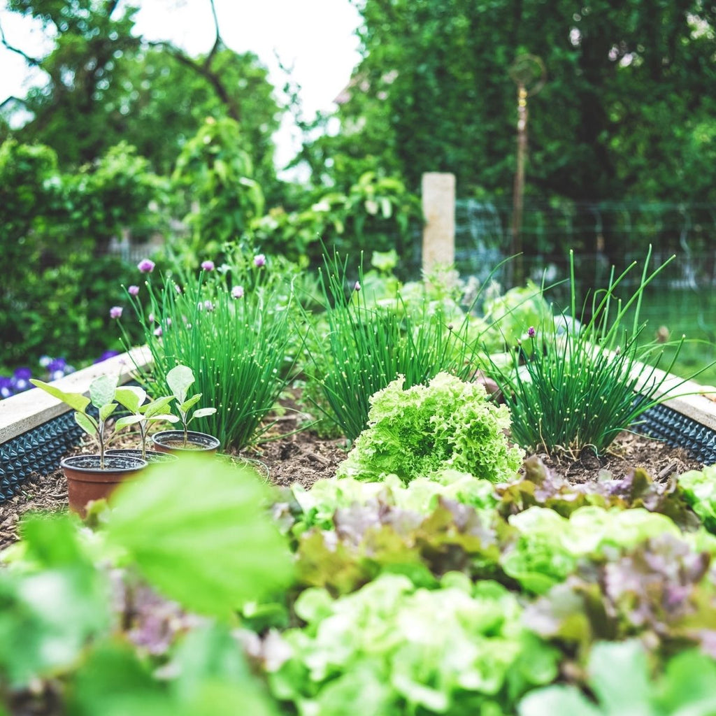 Vegetable patch for How to get organised this month July