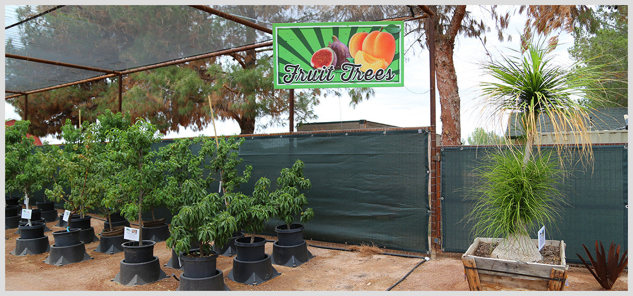 Desert Horizon Nursery Shade Panel and Fruit Trees
