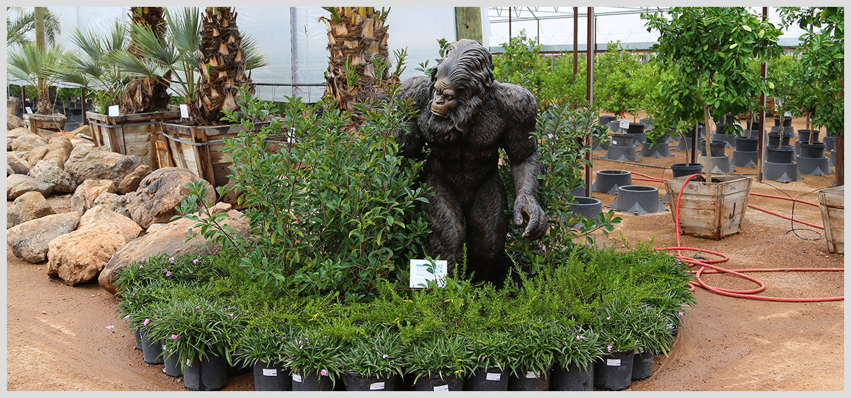 Desert Horizon Nursery Metal Sasquatch