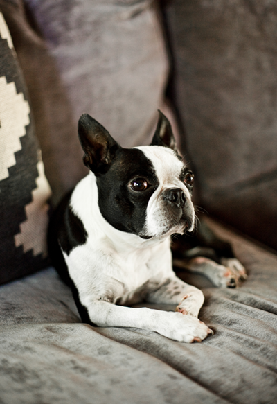A dog sits on a couch.