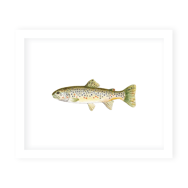 Fly Fishing Brown Trout Art Print