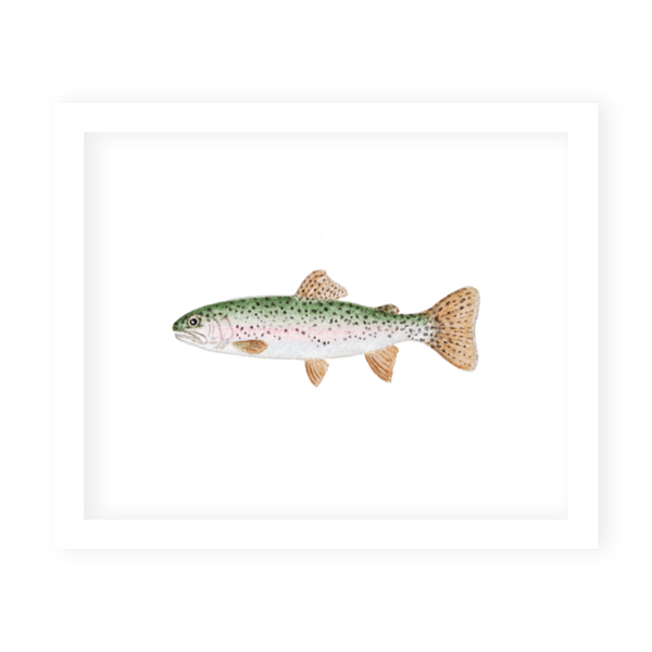Fly Fishing Rainbow Trout Art Print