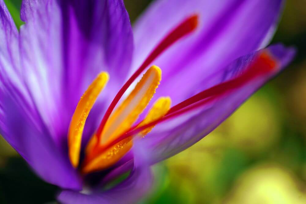 Benefit from a premium-quality saffron extract