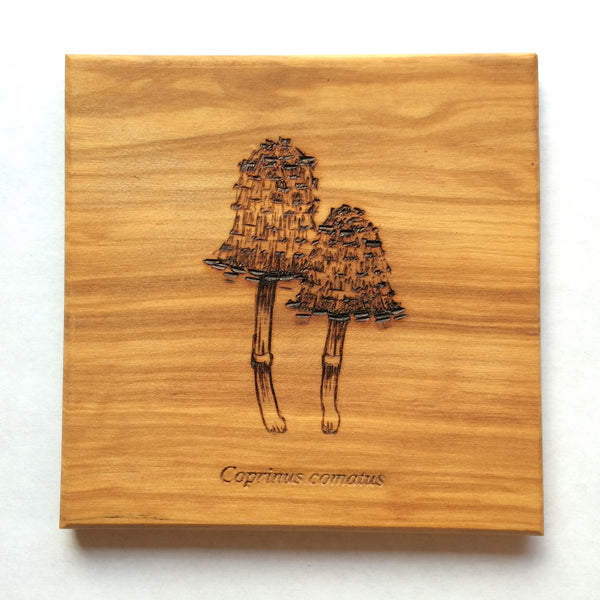 Coaster Set - Edible Mushrooms of the Pacific Northwest