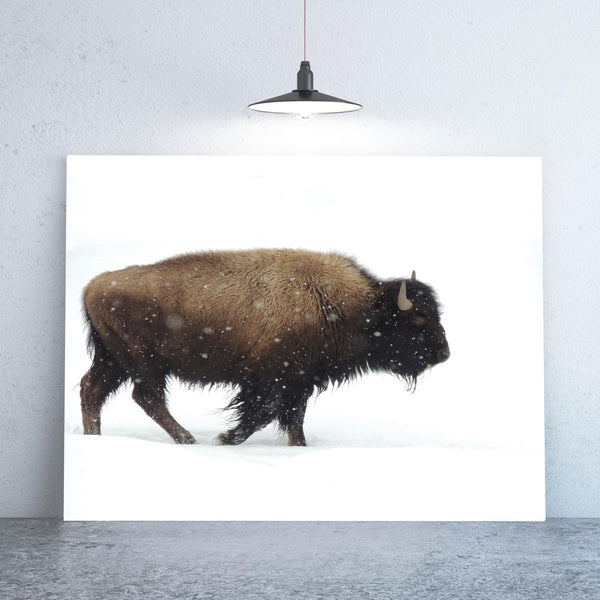 Yellowstone Bison Print