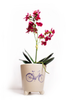 Matching Bicycle Pot and Card