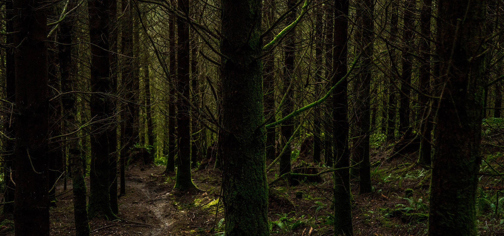 Deep in the dark woods of the PNW