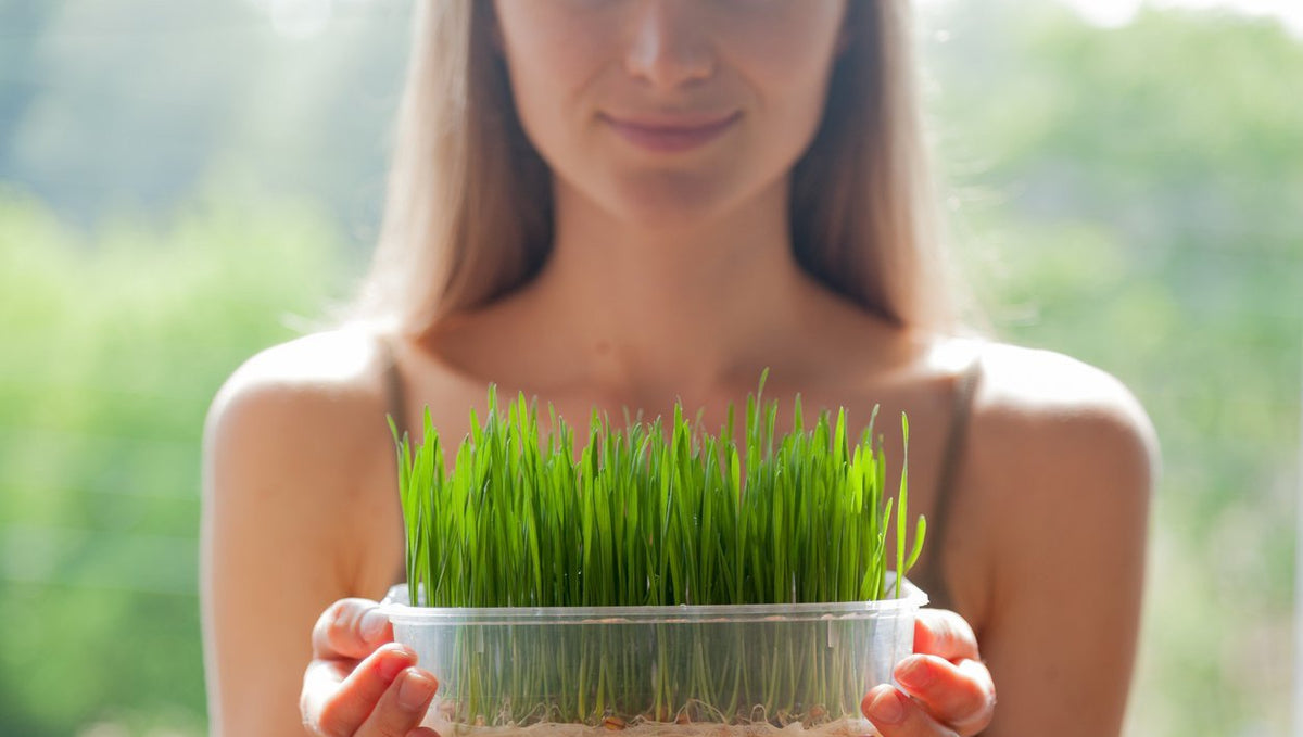 How to Guide for Growing your Greens for Naturally Beautiful Skin and Hair